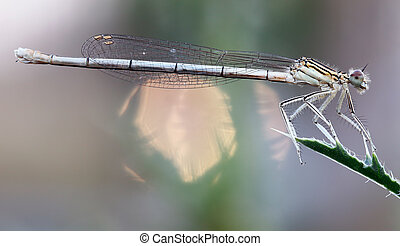 Dragonfly on leaf - Image of the dragonfly on leaf
