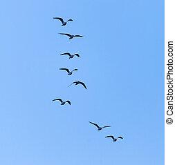 falka, Ég, madarak