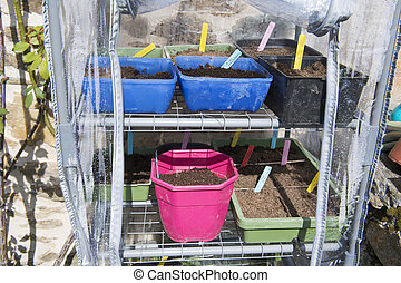 Sowing seeds ib little green house