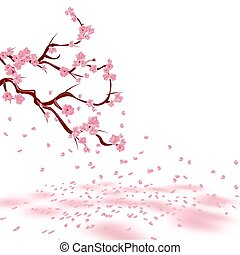 Branches of a faded pink cherry. Sakura. The petals crumble...