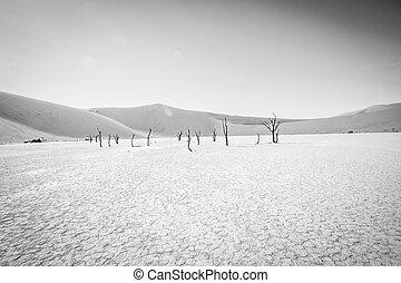 Dead tree in Sossusvlei in black and white. - Dead tree in...