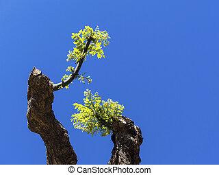 retoño, podado, árbol, joven