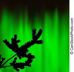 Silhouette of coniferous branch