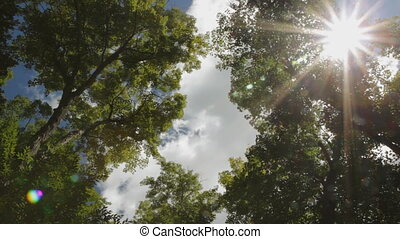 Sunny summer trees - Sun shining through branches of green...