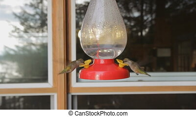 Two hummingbirds. - Two hummingbirds at a feeder.