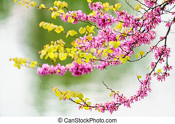 spring branch. Spring blossom background. beautiful nature scene