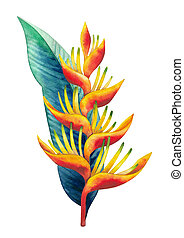 Watercolor heliconia bouquet. Hand painted exotic flowers...