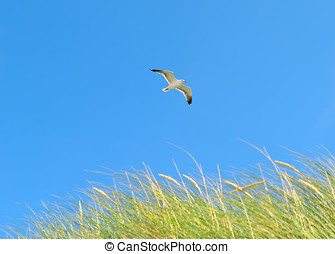 On the Beach by the Sea - Seagull