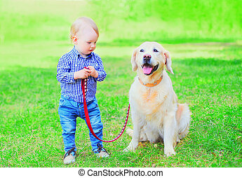 child is playing with Golden Retriever dog on the grass on a...