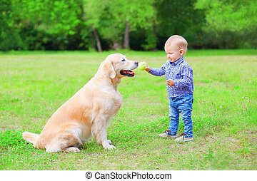 Little child with Labrador retriever dog is playing together...