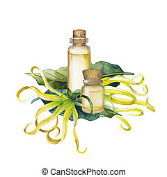 Watercolor ylang ylang oil. Hand painted bottles, leaves and...