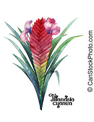 Watercolor tillandsia cyanea bouquet. Hand painted exotic...