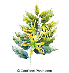 Watercolor ylang ylang branch. Hand painted leaves and...