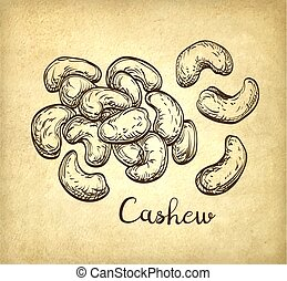 Handful of cashews. Vector illustration of nuts on old paper...