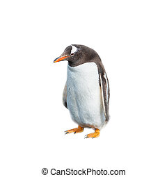 Isolated at white background funny penguin looking stupid