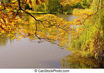 tree on pond in fall 01