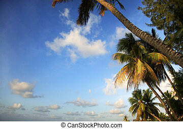 Tropical beach - View of nice tropical beach with palm....