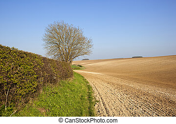 chalky cultivated soil - a hawthorn hedgerow with trees...