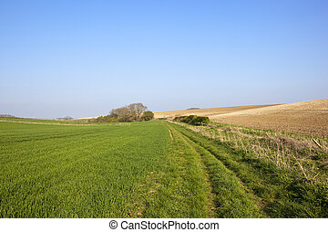 yorkshire wolds in springtime - a grassy bridleway near a...