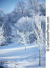 Winter Forest - all frozen trees covered by snow, selective...