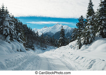 Beautiful snow mountains view with green high pine forest