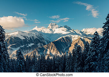 Beautiful snow mountains view with green high pine forest...