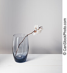 Branch with white flowers in a glass - Branch of apricot...