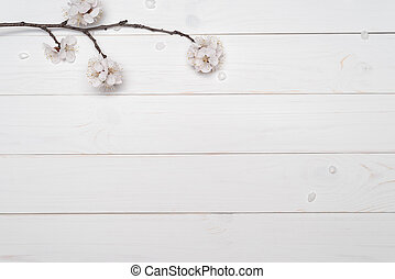 Apricot branch with flowers on a white background