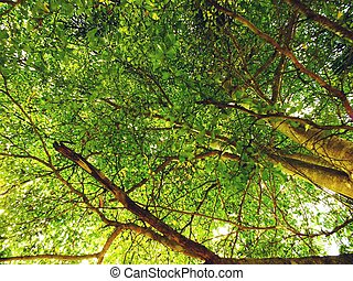 looking up tops of tree branches green nature abstract...