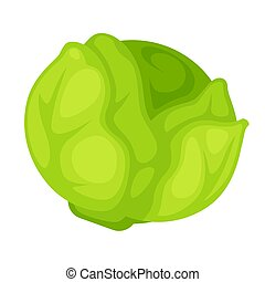 Green organic cabbage - Vector illustration of the whole...