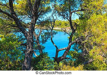 Morning Aegean coast, Sithonia, Greece. - Summer Aegean Sea...