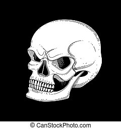 Graphic skull with fearful smile. Vector tattoo art isolated...