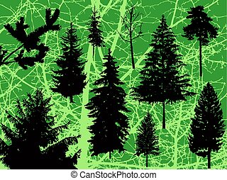 Silhouette of pine trees. - Silhouette of different pine...