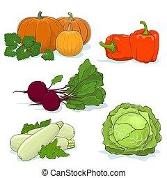 Gardening Vegetables Isolated on White - Fresh Gardening...