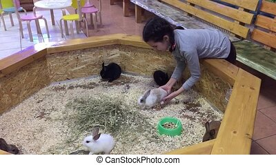 rabbit. Girl in a contact zoo playing with rabbits - rabbit....