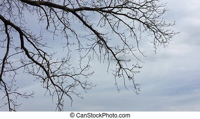 Dry branches of trees without leaves. Nature forest against...