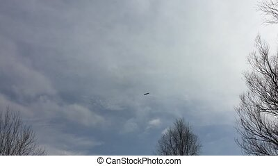 Crane bird heron flies in the sky nature spring - Crane bird...
