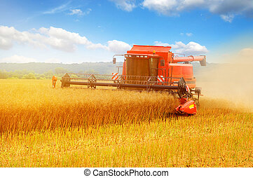 Combine working in field