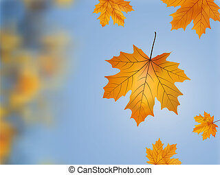 Falling wilted leaf. - Falling wilted leaf against a out of...