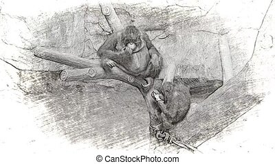 orang utan playing inside zoo compound video clip