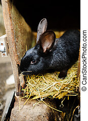 Big black rabbit in a cage. Big black rabbit in a cage. Sits...