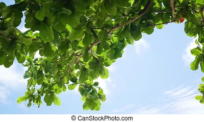 green tree leaves on blue sky background at Sunny day