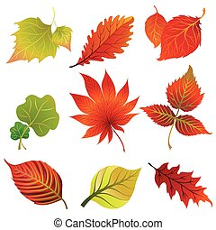 Vector set 2 of colorful autumn leafs design elements...