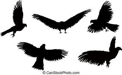 Silhouettes of eagle. - Set. Silhouettes of flying eagle.