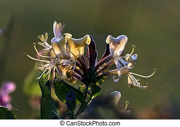 Wild fleshy flower macro. End of the day light.