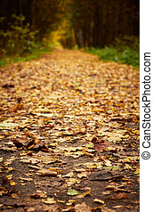 Forest path at autumn season. Defocused shot for better space for text in center. Vertical orientation.