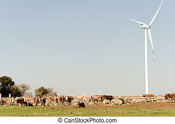 detail of a cow and a eolic power plant in a meadow near...