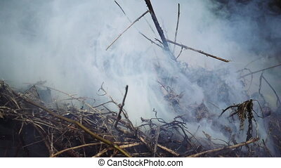 Burning and smoking heap of branches and leaves - Burning...