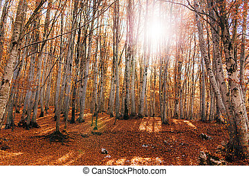 Autumnal landscape with a birch grove on an edge of...