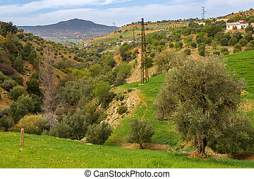 Spring landscape around Fes, Morocco - March in Morocco is...